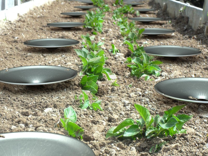 Growing Food in Dry Environment